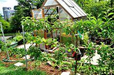 Horta orgânica da brasileira Jaqueline Brockert, que mora há dez anos no Oregon (EUA)