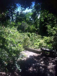 community garden, Brooklyn, NY.