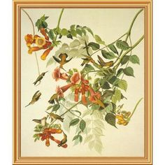 Global Gallery 'Ruby-Throated Hummingbird' by John James Audubon Framed Wall Art Size: