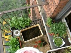Make the most of your gardening space with these tips for growing food efficiently! #foodsecurity