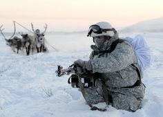 Servicemen of Russia's Northern Fleet Arctic Brigade recently took part in some extremely cold-weather training exercises to sharpen their skills at using some of the unique transportation options of the region. Russia News, Special Forces, Cold War, The Expanse, Finland, Cold Weather, Reindeer, Army, Dogs