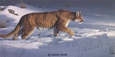 Wildlife Paintings, Wildlife Art, Animal Paintings, Oil Painting Pictures, Pictures To Paint, Big Cats Art, Cat Art, Daniel Smith Art, Realistic Animal Drawings