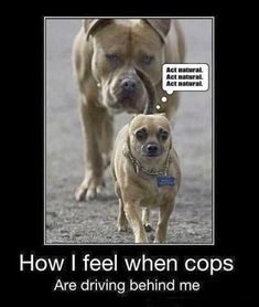 Funny dog pictures with 23 pictures like shotgun dog. Some funny dog pictures with captions. #funnydogwithcaptions
