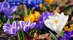 Fiori da seminare a febbraio: prepariamo il giardino per la primavera!  La primavera chiama? Il pollice verde risponde! Scopri come preparare il giardino per le fioriture primaverili e quali sono i fiori da seminare a febbraio.  http://www.vivailoda.it/i-consigli-del-giardiniere-dettaglio.php?consiglioId=42  #semine #febbraio #fiori