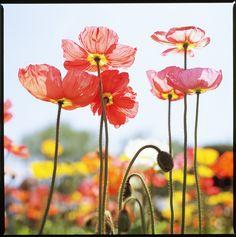 love the brightness so much.  flowers, via Flickr.