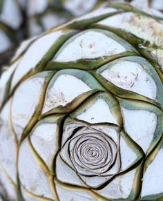 You know all about tequila and if you don't you can learn about the agave plant spirit from our tequila guide. But you've heard the buzz about mezcal and want t Tequila Bottles, Tequila Drinks, Cocktails, Tequila Quotes, Tequila Agave, Best Tequila, Agave Plant, Watercolor Projects, Naturaleza