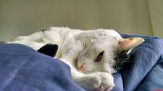 Good morning - http://cutecatshq.com/cats/good-morning-8/