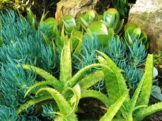 The Indigenous Gardener web magazine South Africa Web Magazine, Cactus Plants, South Africa, Landscaping, Vegetables