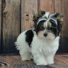 I found my next dog!!!