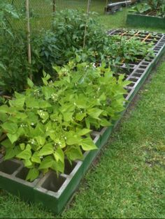 turning your small backyard into a farm