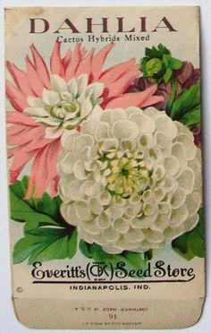 EVERITT'S SEED STORE,  Dahlia 91, Vintage Seed Packet