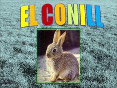 Projecte del conill. curs 2010 11