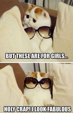 Funny cat wearing sun glasses.... (Click on picture to see more stuff) More: