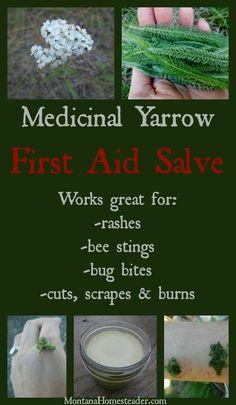 Healing Herbs, Medicinal Plants, Natural Healing, Natural Oil, Natural Beauty, Holistic Healing, Holistic Wellness, Natural Home Remedies, Herbal Remedies