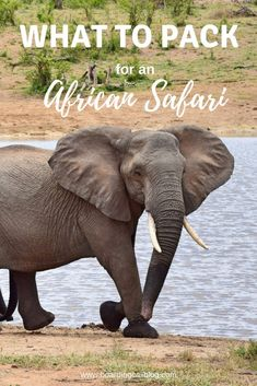 What to pack for an African safari: The essential safari packing list · Boarding Call - Planning an African safari? Don't miss these tips on what to pack! Africa Destinations, Travel Destinations, Travel Guides, Travel Tips, Travel Packing, Packing Lists, Packing Hacks, Travel Advise, Packing Checklist