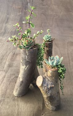 Simple, natural DIY succulent planters from tree branches! Step-by-step tutorial for these tree branch planters - I am obsessed with them! Pin now, and read later! diy garden tips DIY Tree Branch Planters for Succulents Succulent Planter Diy, Succulent Gardening, Diy Planters, Garden Planters, Succulents Garden, Container Gardening, Gardening Tips, Planter Ideas, Succulent Ideas