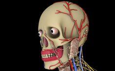 make a stunning 3d medical model by jovanilov