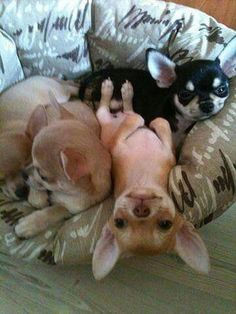 There's always one living upside down.