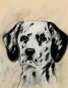 All Spots Dalmatian Dog Art Print By Cori Solomon