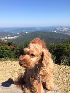 青い空、綺麗な鳥羽湾に癒されました。しし丸は初めて見た景色に屁っ放り腰でした(笑)