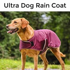 Why does your dog need a raincoat? Waterproof Dog Coats, Waterproof Fabric, Dog Smells, Dog Raincoat, Dog Care, Life Is Good, Labrador Retriever, Best Friends, Dogs