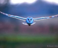 This flying owl straight on!