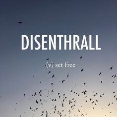 Disenthrall |ˌdisənˈTHrôl| dis-enthrall late Middle English (in the sense 'enslave'; formerly also as inthrall): from en-,in- (as an intensifier) + thrall. . . #beautifulwords #wordoftheday #disenthrall #setfree #freedom #flight #fly #birds #humayunstomb #delhi #india #