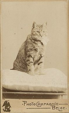 I have studied many philosophers and many cats.  The wisdom of cats is infinitely superior.  ~Hippolyte Taine