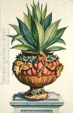 Aloe Americana Minor from Phytographia Curiosa by Abraham Munting