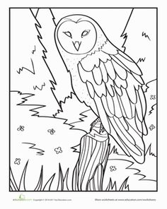 Preschool Animals Worksheets: Owl Coloring Page