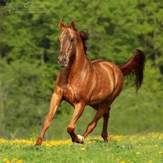 19 Best Rearing Up Horses Images Beautiful Horses