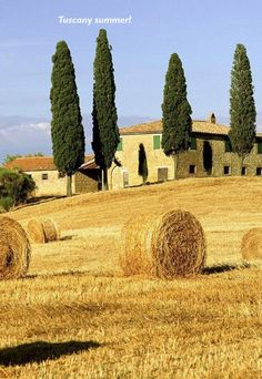 wheat fields in Tuscany #tuscany #toscana #holiday #centopino