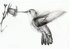 Hummingbird Sketch - Bing images
