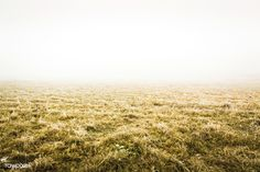 Dried yellow grassland | free image by rawpixel.com Free Photos, Free Images, Cool Photos, Earth Texture, Grass Field, Green Fields, Textured Wallpaper, Image House, Best Location