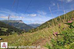 Bergblumen und Blüten sind wahre Highlights auf den Bergwiesen Highlights, Mountains, Nature, Travel, Eagle, Italy, Naturaleza, Viajes, Luminizer