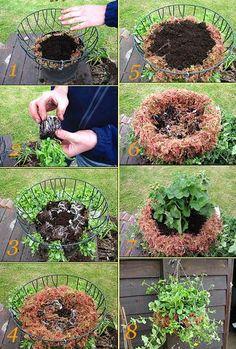 Суккуленты, Растения, Проекты