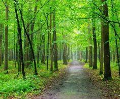 Fotobehang Bossen - forest trees. nature green wood backgrounds - Foto4art.be