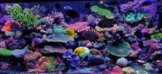 Aquarium Algae, Coral Aquarium, Big Aquarium, Aquarium Design, Marine Aquarium, Saltwater Aquarium, Aquariums, Salt And Water, Fresh Water