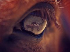 "AMAZING closeup picture of a horse's eye reflecting horses running in front of him as he watches through his lush long brown eyelashes. Sure, it's a composite photoshop picture but the creativity of this concept still makes it art.  -DdO:) - > http://www.pinterest.com/DianaDeeOsborne/gorgeous-horses-more - > Photo Pin via Teresa Bedwell - so glad to pass on her photo named ""Creation""."