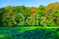 Qdiz Stock Photos | Colorful Trees on Green Meadow in Frost,  #autumn #background #beautiful #beauty #blue #branch #colorful #day #environment #field #foliage #frost #golden #grass #green #hoarfrost #idyllic #land #landscape #lawn #leaf #leaves #meadow #morning #multicolored #nature #nobody #orange #outdoors #park #plant #scenery #scenic #season #sky #sunny #tranquil #tree #view #weather #wood #yellow