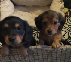 Baby Abby n Baby Benny 5 weeks old