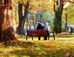 Wrocławska Jesień #wroclaw #wrocław #jesień #fotoartwroclaw #drzewo #liście