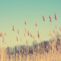 Prairie Photography