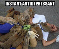 Crazy bunny lover