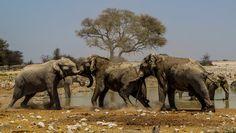 Rivalisierende Elefanten am Wasserloch