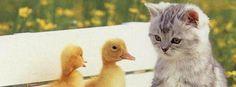 Gato y patitos