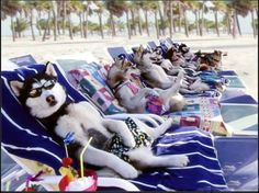 Funny Family Vacations: Dogs on vacation