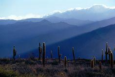 Cactus in Cafayate, Argentina#Adossée aux contreforts de la cordillère à 1 660 m, Cafayate est entourée de magnifiques vignobles. Cette bourgade paisible attire pas mal de touristes venus admirer son architecture coloniale et boire son vin.#http://urlz.fr/3g3v#Grape Travel#2,18,12