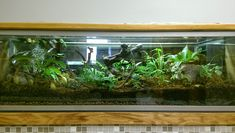 Tropical Terrarium - Biology - www.biology.usu.edu