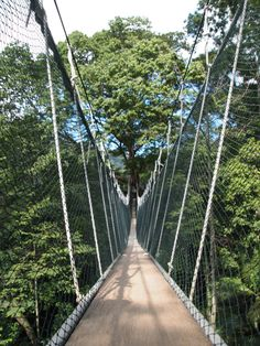 Experience the canopy at the Forest Research Institute Malaysia outside Kuala Lumpur, Malaysia.